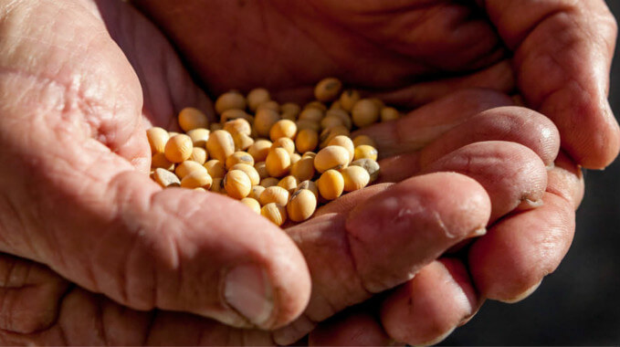 US-China: Farmers Count Cost Of Trade War